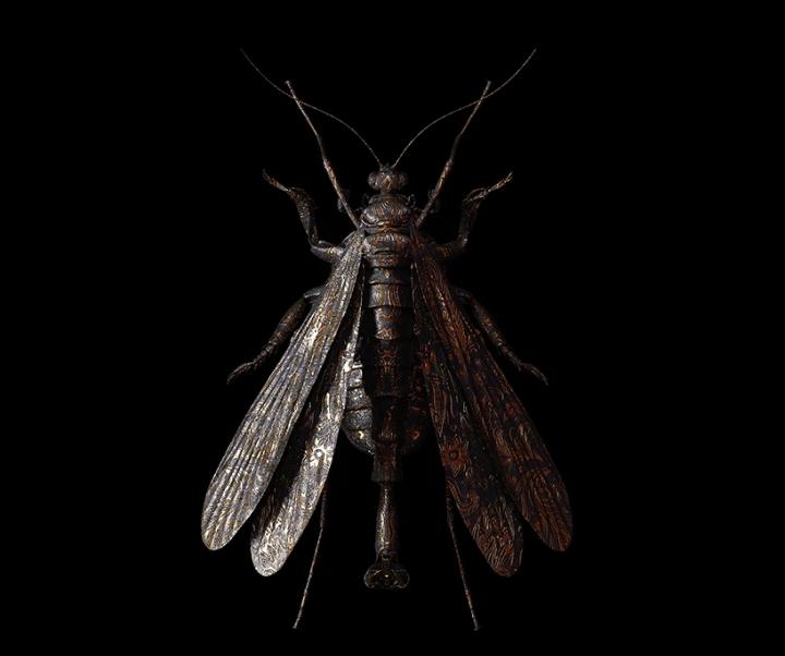billelis-billy-bogiatzoglou-engraved-entomology-designboom-015