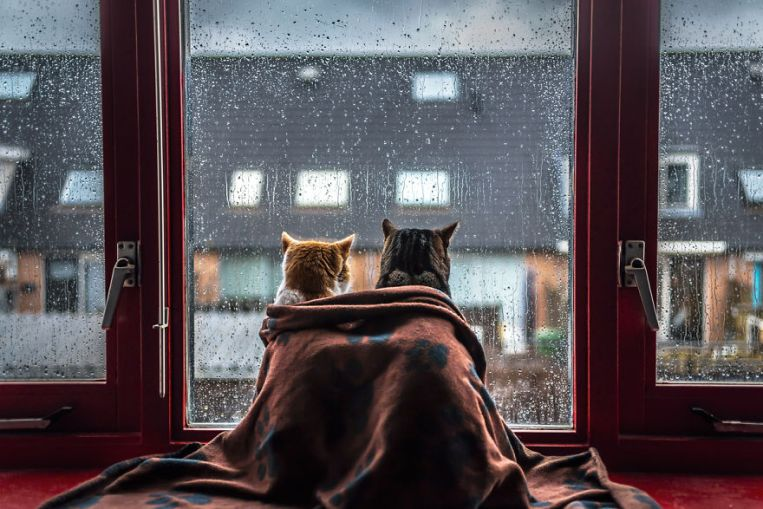 i-photograph-my-cats-in-front-of-the-window-whenever-its-raining-58260ebdb2306__880