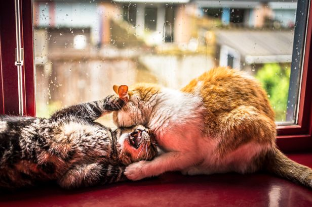 i-photograph-my-cats-in-front-of-the-window-whenever-its-raining-58260eca97bfb__880