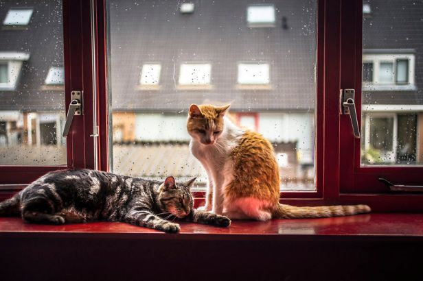 i-photograph-my-cats-in-front-of-the-window-whenever-its-raining-58260ef1e8fe9__880