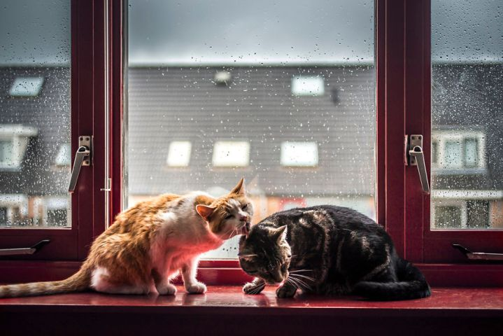 i-photograph-my-cats-in-front-of-the-window-whenever-its-raining-58260f00b868d__880