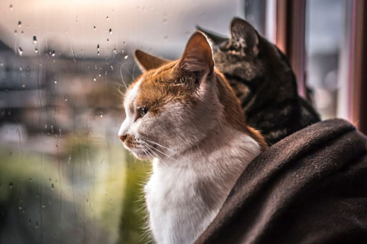 i-photograph-my-cats-in-front-of-the-window-whenever-its-raining-58260f6867c74__880