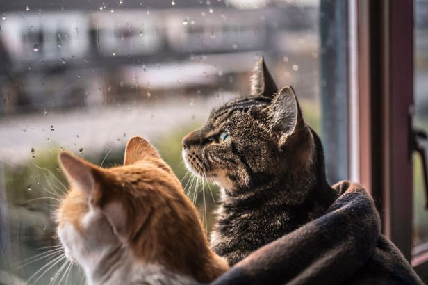 i-photograph-my-cats-in-front-of-the-window-whenever-its-raining-58260f7666e49__880