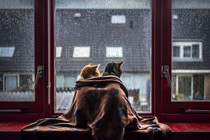 i-photograph-my-cats-in-front-of-the-window-whenever-its-raining-58261a9e8bcf2__880