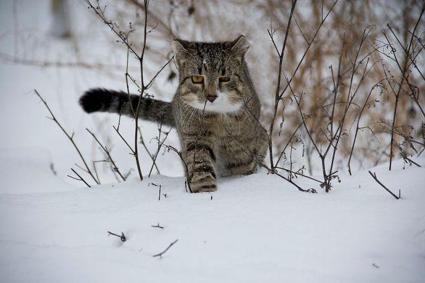 cat-188088-5879e7ff56ff1__880