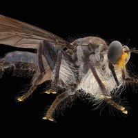 Super Magnification of insects by the ALPA'S  SWITAR LENS