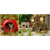 Nature photographer adopts cheerful field mice, crafts playgroud village for them