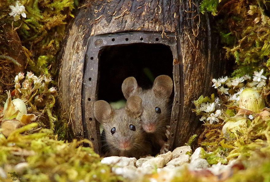 miniature-mice-family-house-simon-dell-43