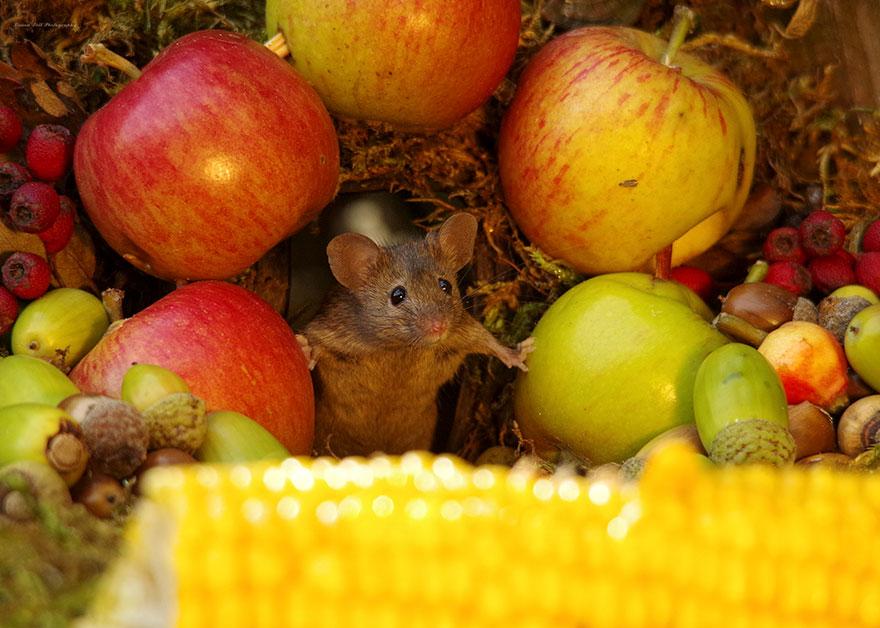 miniature-mice-family-house-simon-dell-45