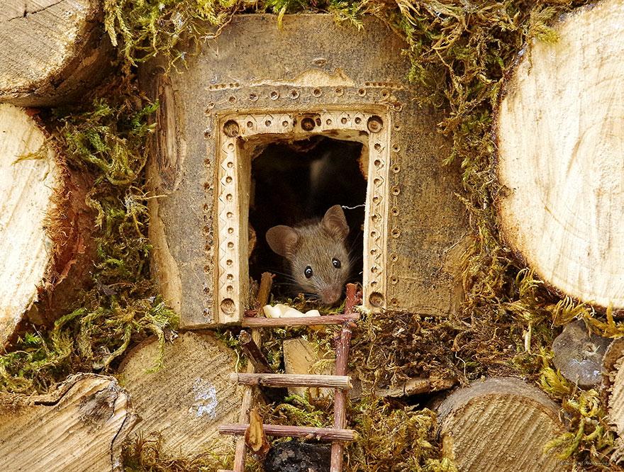 miniature-mice-family-house-simon-dell-46