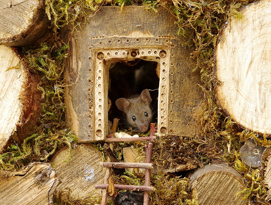 miniature-mice-family-house-simon-dell-46