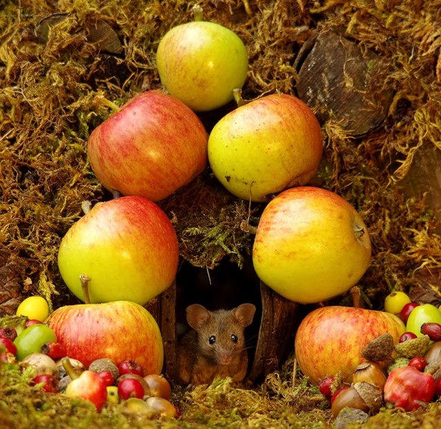miniature-mice-family-house-simon-dell-48