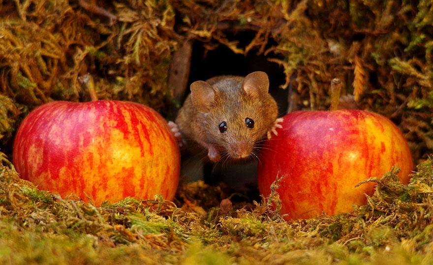 miniature-mice-family-house-simon-dell-55
