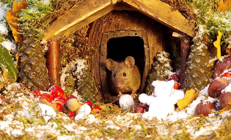 miniature-mice-family-house-simon-dell-61