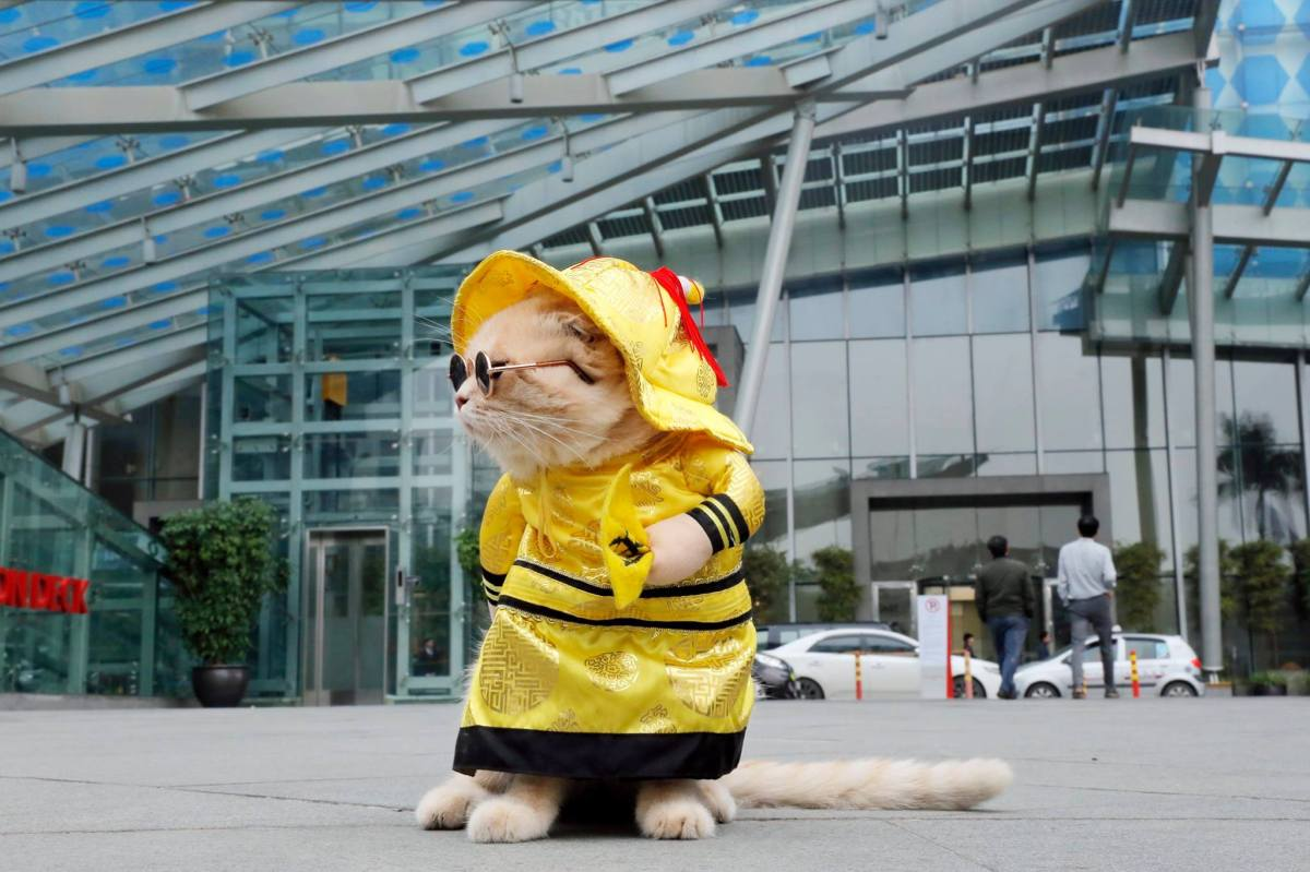 Adorable yellow vest cat vendor stalks the streets of Vietnam