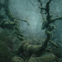 Neil Burnell visits the most haunted forest in Britain, and returned with fairytale photos