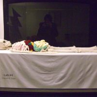 Shanell Papp crafts an exact replica of the human skeleton in Crochet
